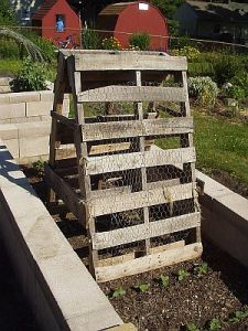 chicken fencing stapled on pallet trellis